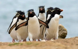 penguin-800x500